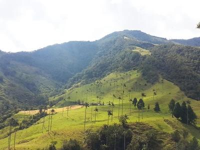 Visita al Valle de Cocora