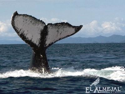 Ballenas a la Vista en Bahía Solano